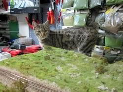 Jetzt ist auch klar, weshalb der Bau des neuen Segments so schnell vorangeschritten ist! Samira unsere Katze hat mir kräftig geholfen...
